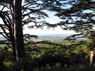 Hike - The Cedar Forest-BONNIEUX ©