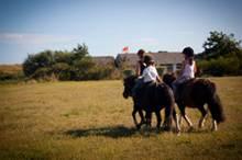 Arzon Equitation