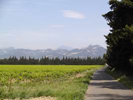 Les sentiers vélos - Balade de Jonquières à la Via Venaissia- ©