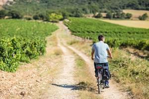 Balade Vigneronne à vélo à la cave des Collines du Bourdic