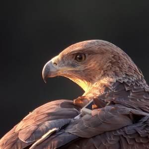 Alphabet de la biodiversité dans le Bois des Lens: de l'Aigle de Bonelli à la Zygène cendrée