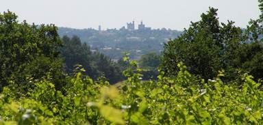 Procudcteur Les Vignes de l'Arques AOP Vins Duché d'Uzès