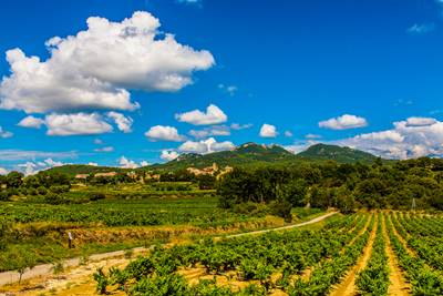 Cycling itinerary - the Comtadin vineyards- ©C. Constant