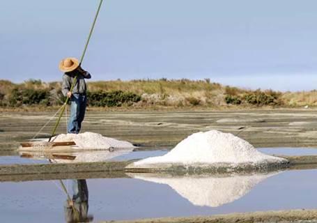 Terre de Sel - Le sel de Guérande