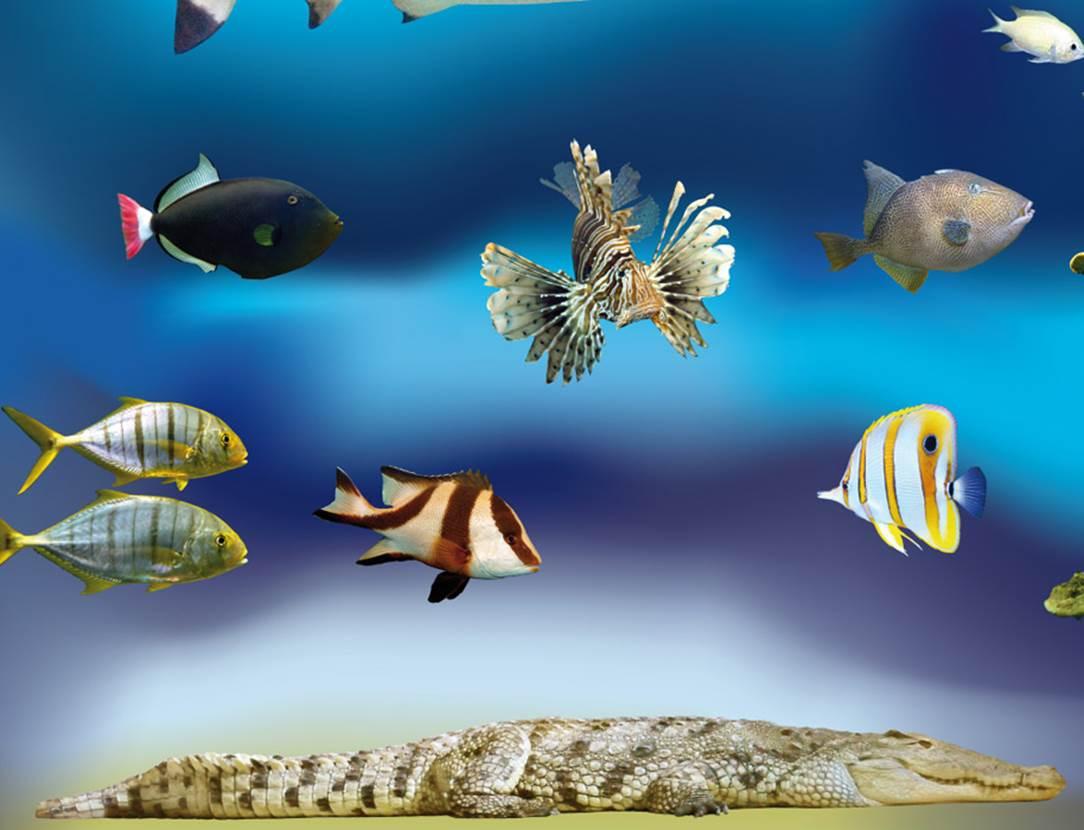 Aquarium-de-Vannes-Golfe-du-Morbihan-Bretagne Sud