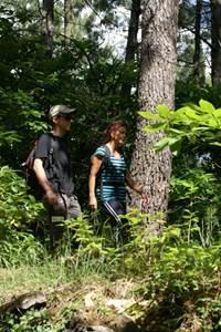 Promenons-nous dans les bois de Sauvages