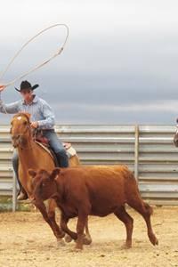 Randals bison : compétition de ranch sorting