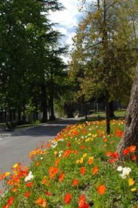 Parc du Bosquet