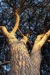 Dans la peau d'un arbre