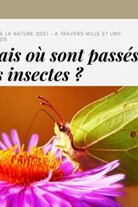 Fête de la Nature - A travers mille et un regards -  Mais où sont passés les insectes ?