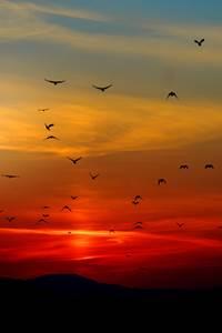 Sortie Nature - Le jour de la nuit
