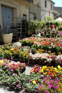 Festival des Fleurs, des plantes et des saveurs à Sommières