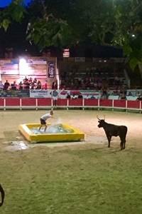Toro piscine aux arènes de Remoulins - Août 2020