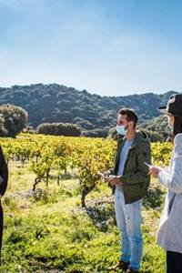 Enquête dans les vignes - fascinant week end Vignobles et Découvertes