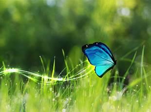 Tropique du Papillon