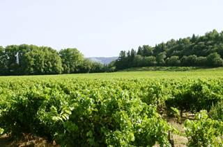 Pont du Gard et Balade vigneronne au Domaine Saint-Charles