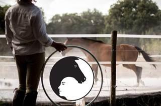 Coaching et Médiation par le Cheval