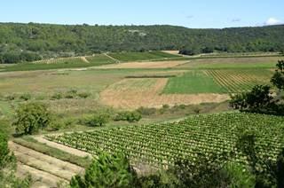Vins des Coteaux du Pont du Gard