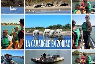 La Camargue en zodiac
