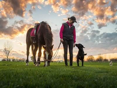 Training club canin du Florival