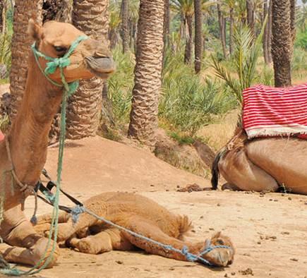 Mobilboard Marrakech