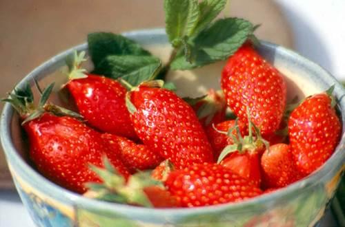 fraises gariguettes ©