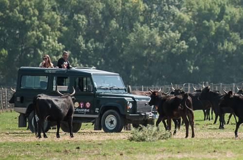 Safari Camargue Autrement ©