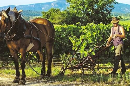 Ferme Equestre ©