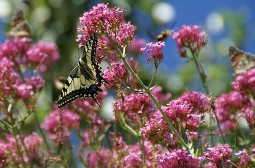 Balade naturaliste- Escapades Nature Gard ©