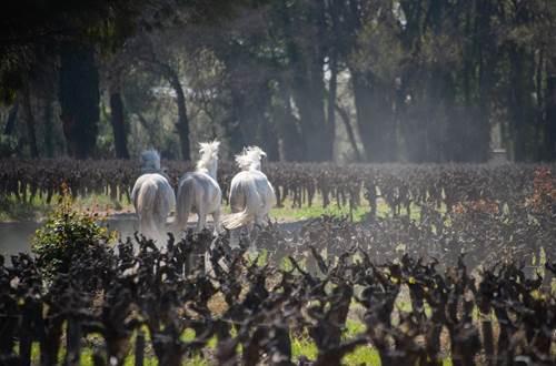 vigne sables ©