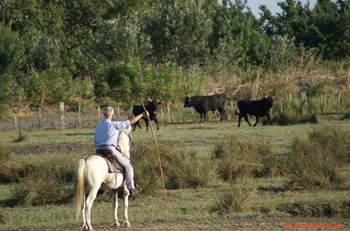 taureau et manadier ©
