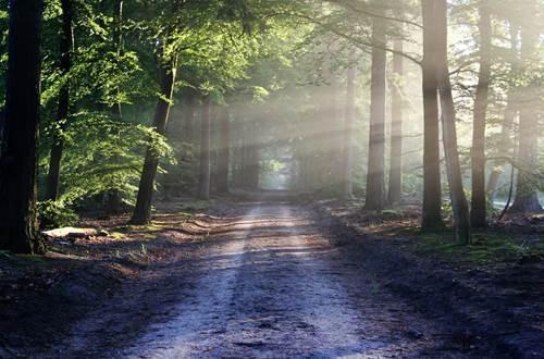 Sur le chemin des odeurs © Pixabay