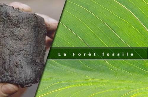 La Forêt Fossile de Champclauson ©