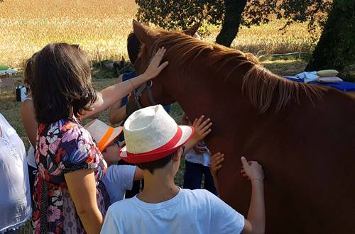 UltreiaAcceuil_L_PSE_Cheval_2018_Provence_Occitane_001 ©