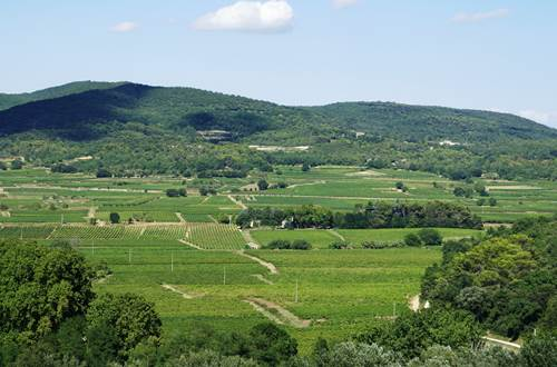 Vignobles de la Vallée de la Cèze ©