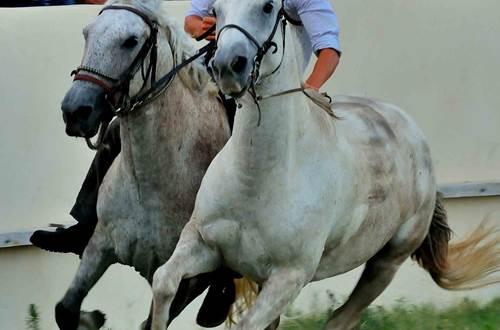 chevaux ©