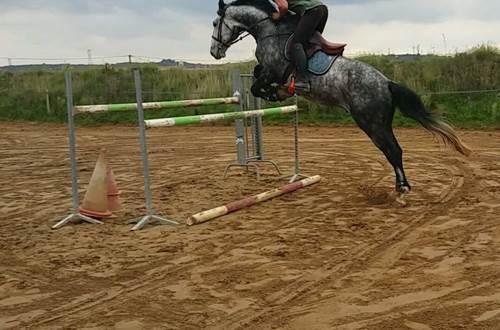 Ecurie du Frigoulas saut d'obstacles © Ecurie du Frigoulas