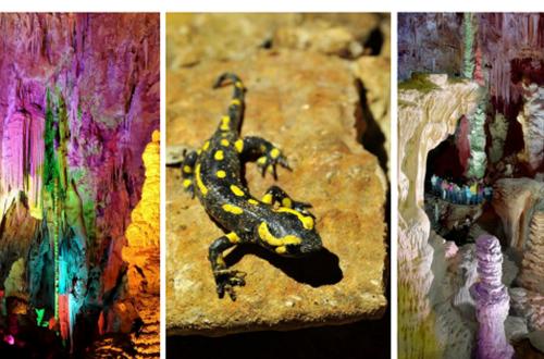 Visite contée à la grotte © Grotte de la Salamandre / OT Méjannes-le-Clap