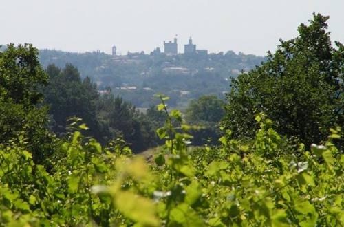 Les Vignes de l'Arque © Les Vignes de l'Arque