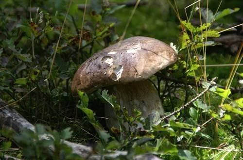 Sortie champignon en Cévennes ©