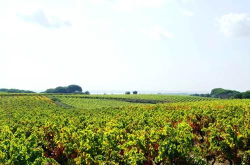 Vignobles des Costières de Nîmes ©