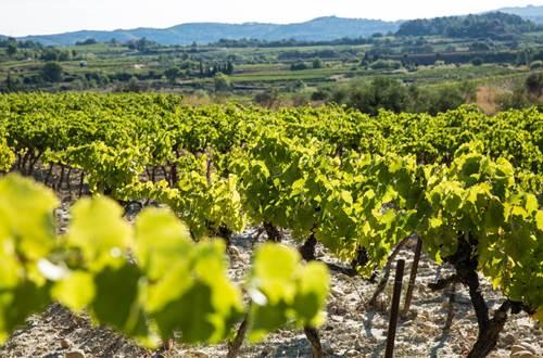 paysage de vignes © OT Pont du Gard
