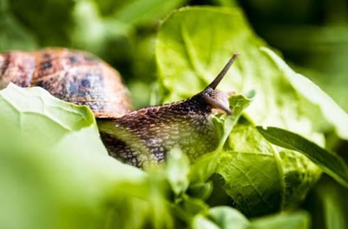 escargots ©