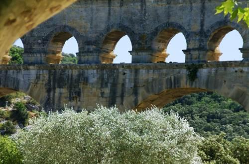 Pont du Gard - Olivier ©