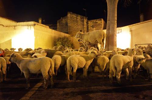 Noël d'antan à Aimargues ©