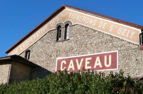 Les Vignerons de Saint-Gély - Vignoble ©