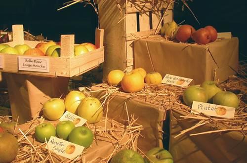 journees-arbre-plante--fruit-collection-pomme ©