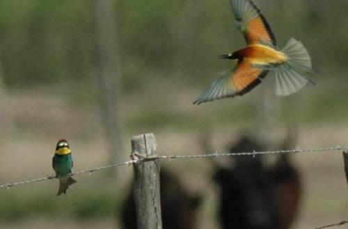 Oiseaux - Camargue Aventure ©
