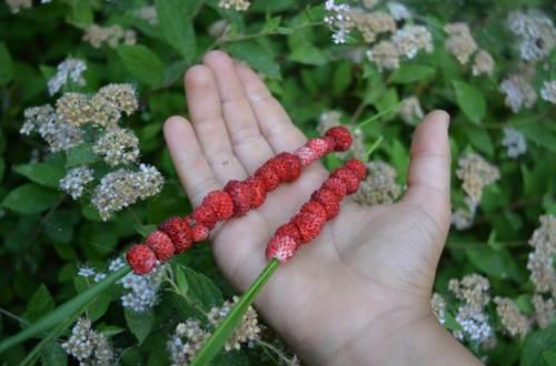 Secrets arbres forêt ©