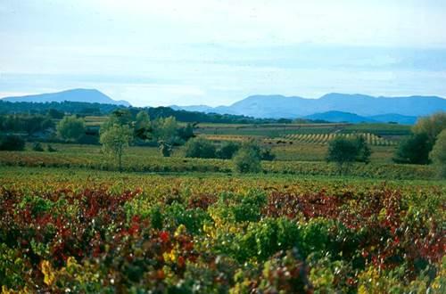 vigne ©